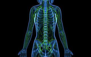 Где находятся лимфоузлы на теле человека: расположение, схема