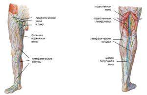 лимфатические узлы нижних конечностей