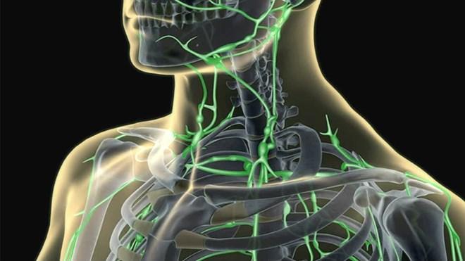 Шейные лимфоузлы расположение - Медицинская помощь