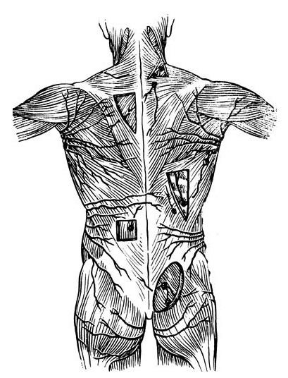лимфатические сосуды кожи спины