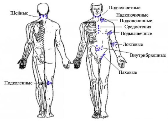 сосредоточение лимфоузлов на теле